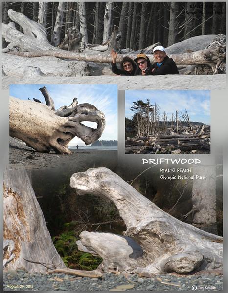 8.26.15 Rialto Beach driftwood S .jpg