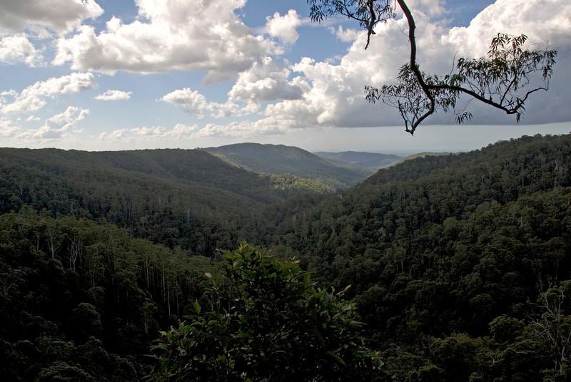 Vista 1, Springbrook National Park - Queensland, Australia