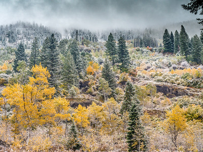 Idaho Fall 2019