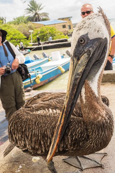 Galapagos-Best-117.jpg