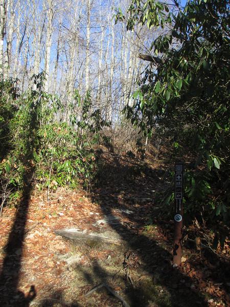 Little Green-Mac's Gap Trail Junction