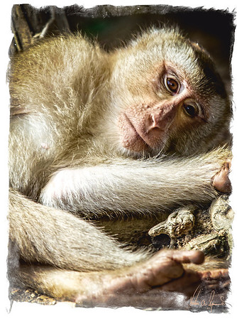 Portraits Of Animals
