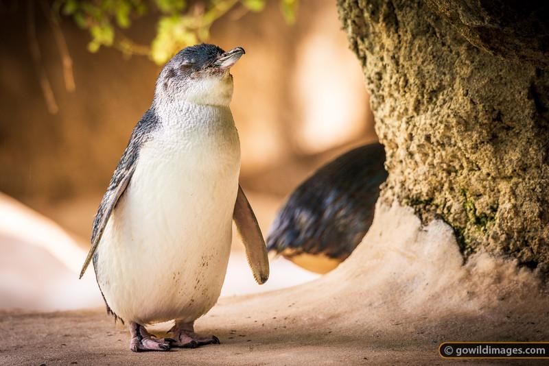 Penguin Nap