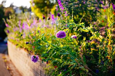 Blue Garden on Foothill 3-28-20