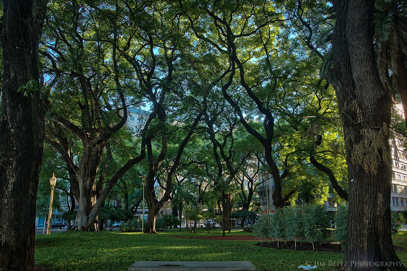 Beautiful trees everywhere throughout Buenos Aires, Argentina.