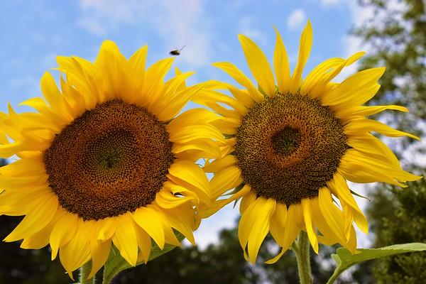 Summertime Flowers (July 2021)