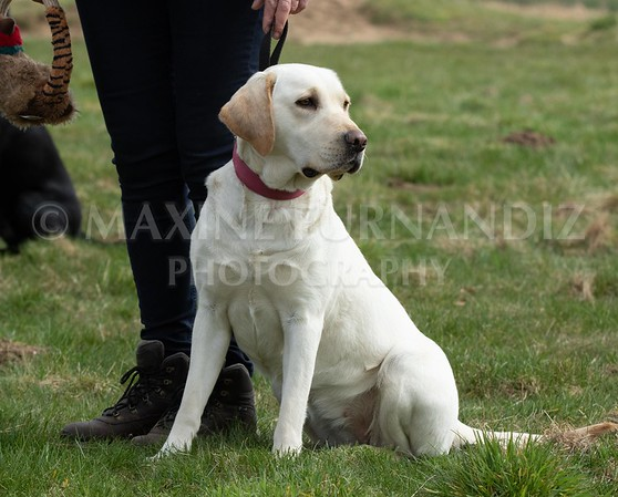 GUNDOG BEGINNERS APRIL 2018