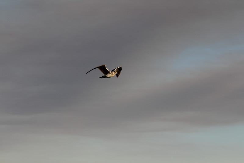 04 The Salton sea (34).JPG