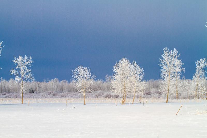 Hoar frost winter landscape CR229-29 Sax-Zim Bog MN  IMG_0041.jpg