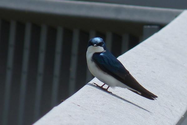 Lake Erie Birding 2012