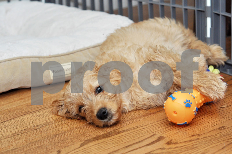 Martinez Pups