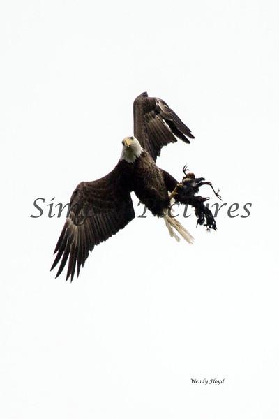 Eagle 32547