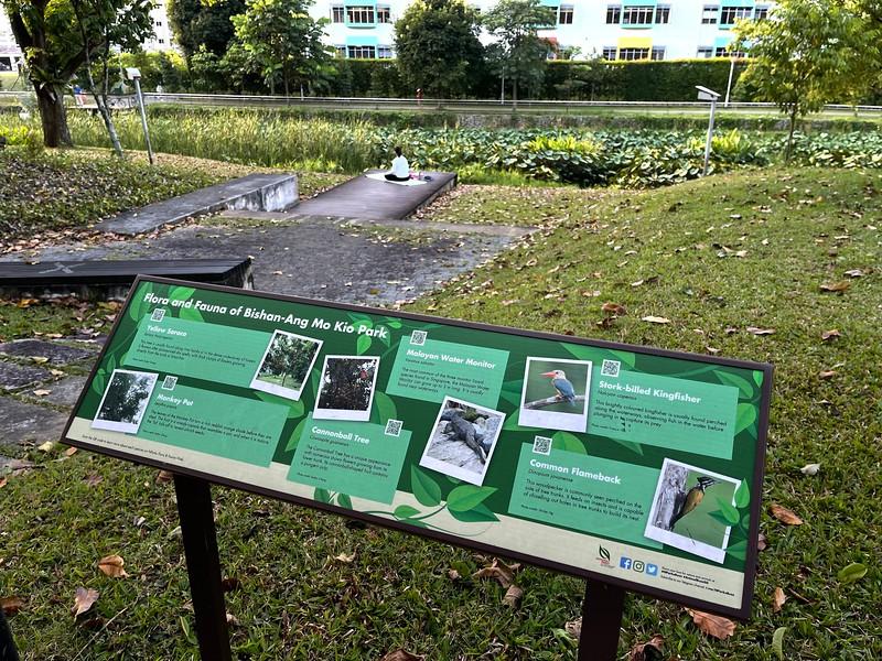 Kallang Park Connector : Bishan-Ang Mo Kio Park