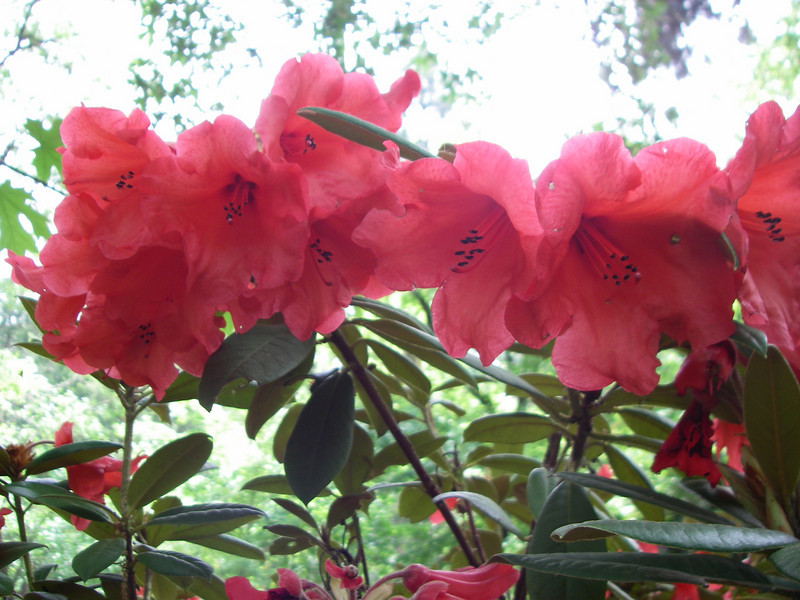 Lithia Park - flowers 4
