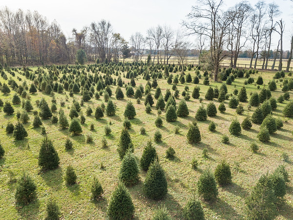 Woodfield Christmas Tree Farm