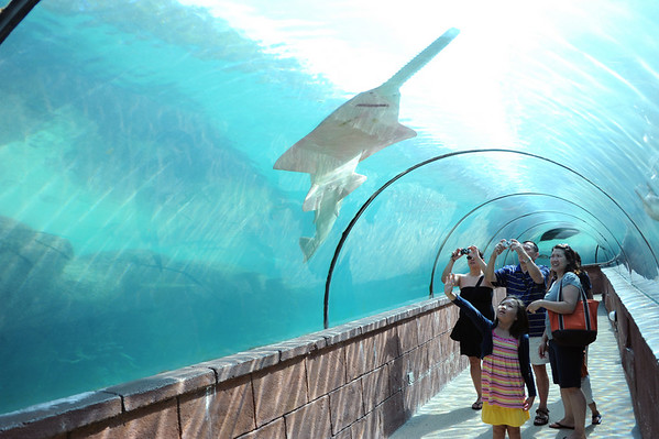 Bahamas-Atlantis: Day 6