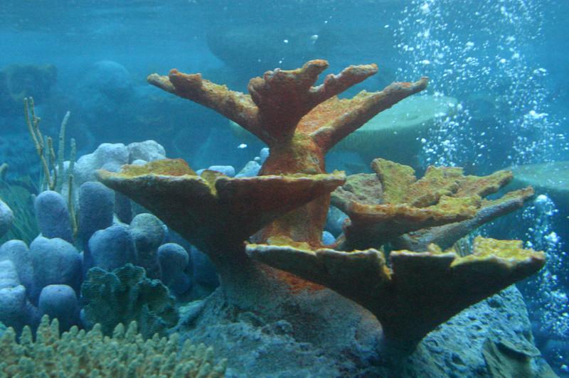 Submarine ride lagoon scene.