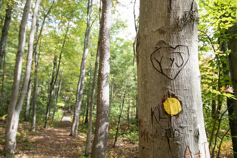 Some lovebirds carved their initials in this tree just above the trail marker at Barrett Park in Leominster. SENTINEL & ENTERPRISE/JOHN LOVE