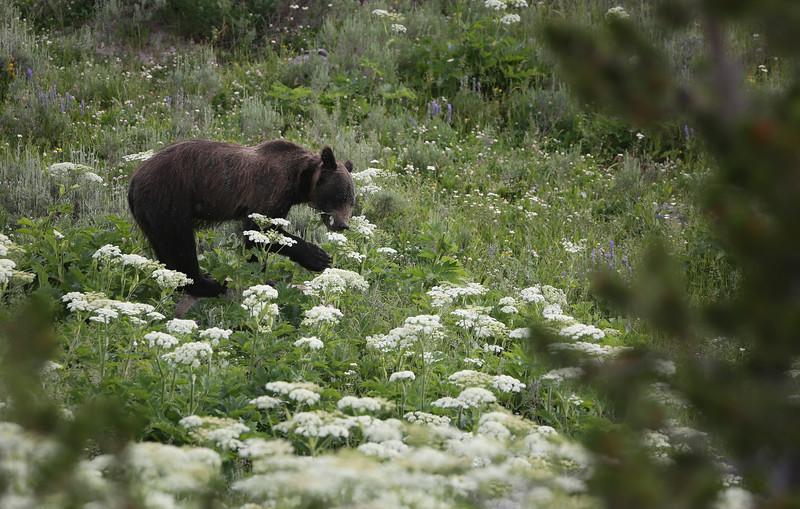 Yellowstone_24.jpg