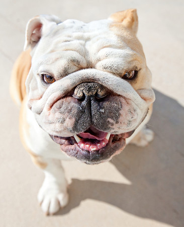 Davey Bulldog Photos