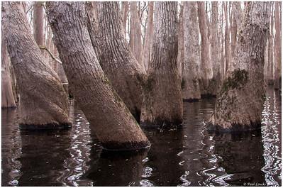 Ebenezer Creek, Effingham County, GA