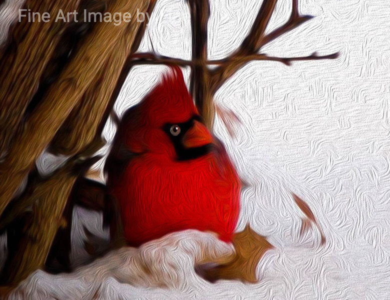 Winter Time Cardinal