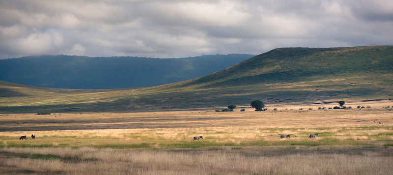 Mark-Fletcher-Zebras at Ngorongoro.jpg