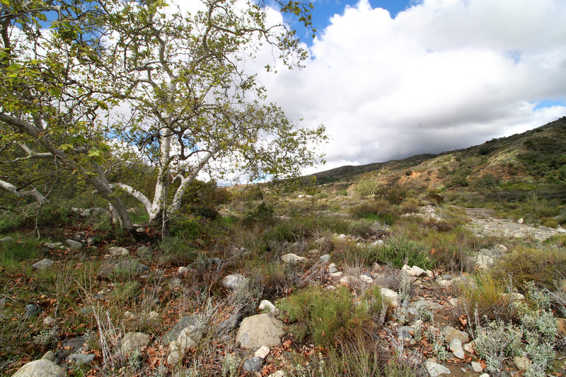 32633-Trabuco-Canyon-Rd-Mitchell-East-Trabuco-Canyon_93.JPG