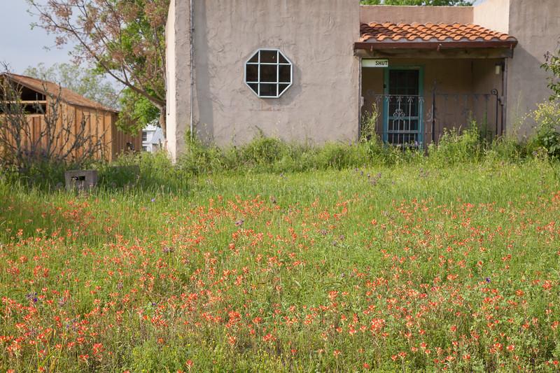 2015_4_3 Texas Wildflowers-8000.jpg
