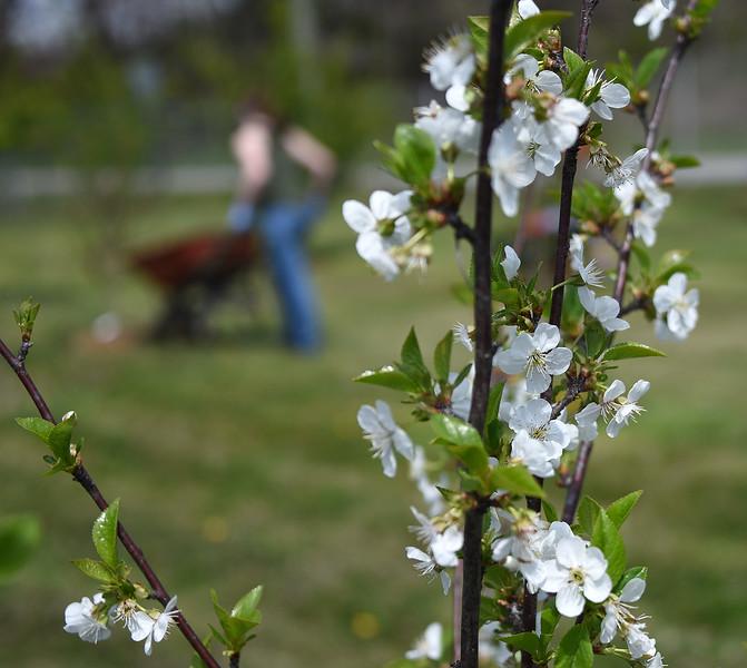 Blossoms_FruitTrees_ADJ_734.jpg