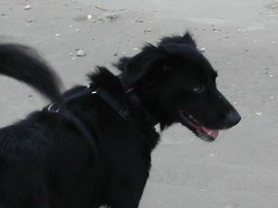 At the Beach 1999