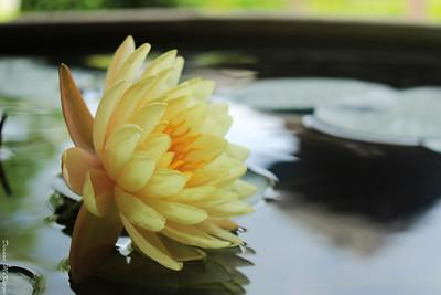 Chiang Mai - Garden