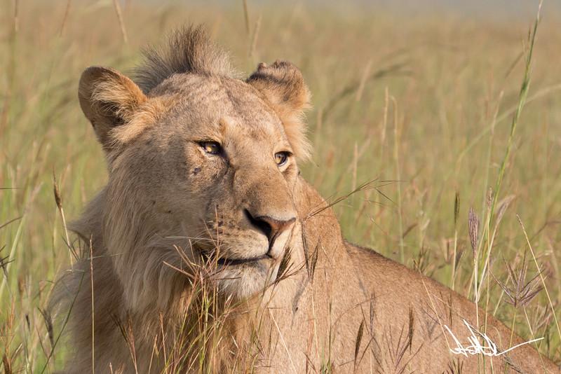 Lions Masai Mara - S-8.jpg