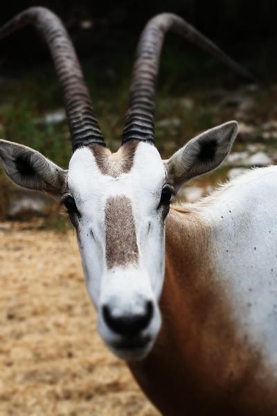 Wildlife Ranch-0626.jpg