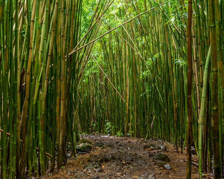 hawaii043.jpg
