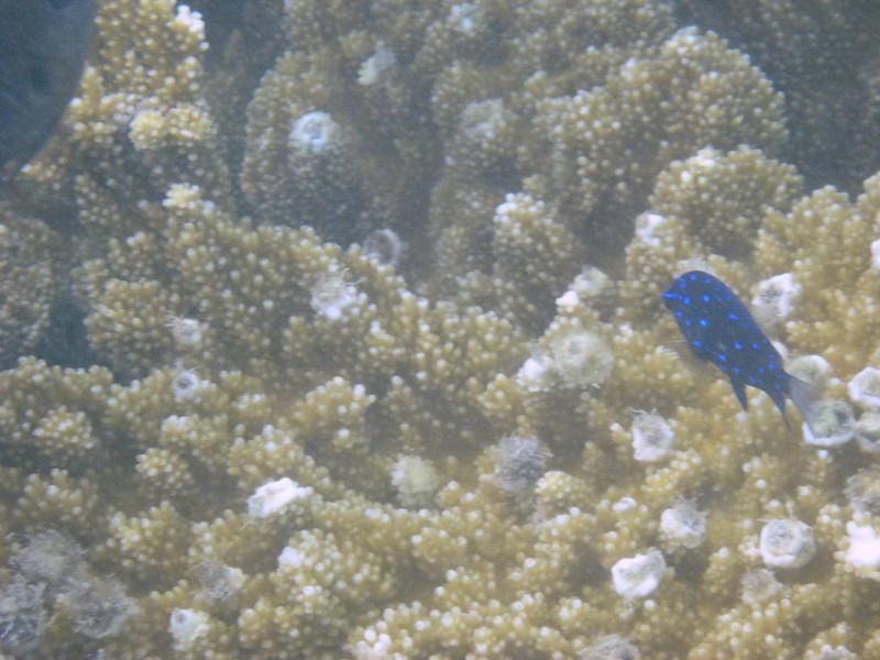 Snorkeling in Willemstad, Curacao