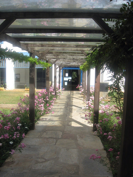 A vine-covered walkway on the campus.