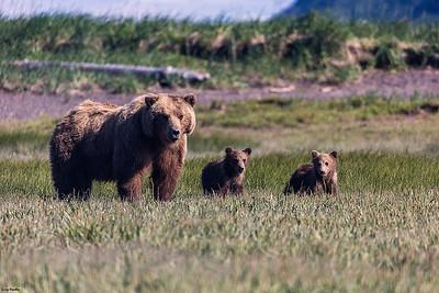 Alaska - Katmai National Park - Da Bears