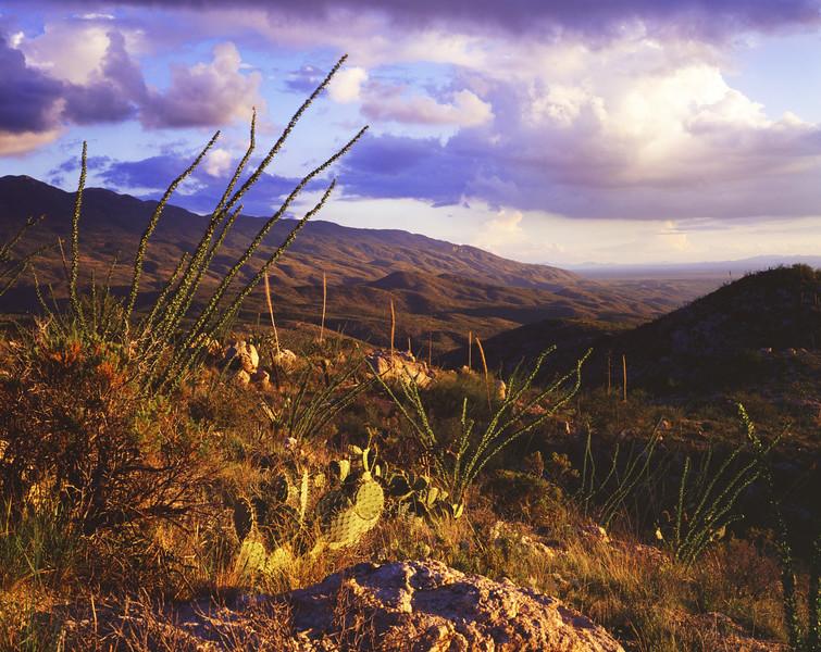 The Tucson Rincons.jpg