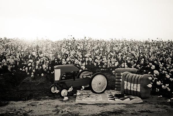 Marley's first cotton crop