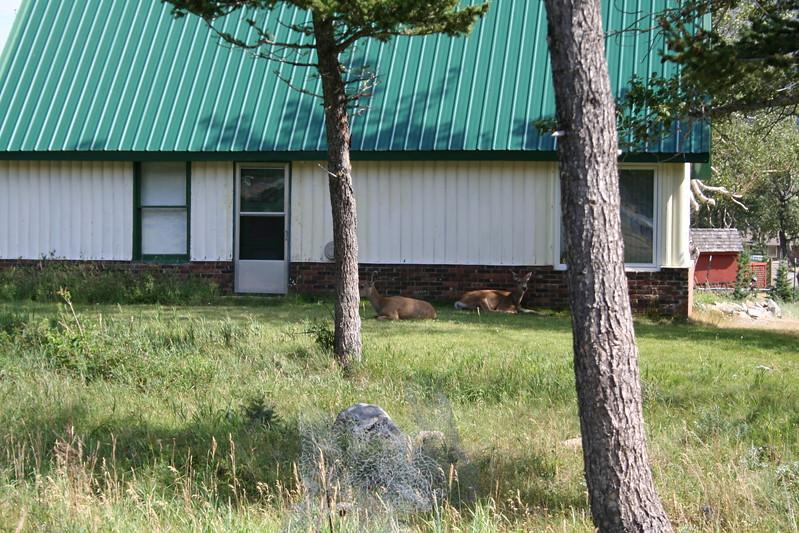 20110829 - 085 - WLNP - Around Waterton Town Site.JPG