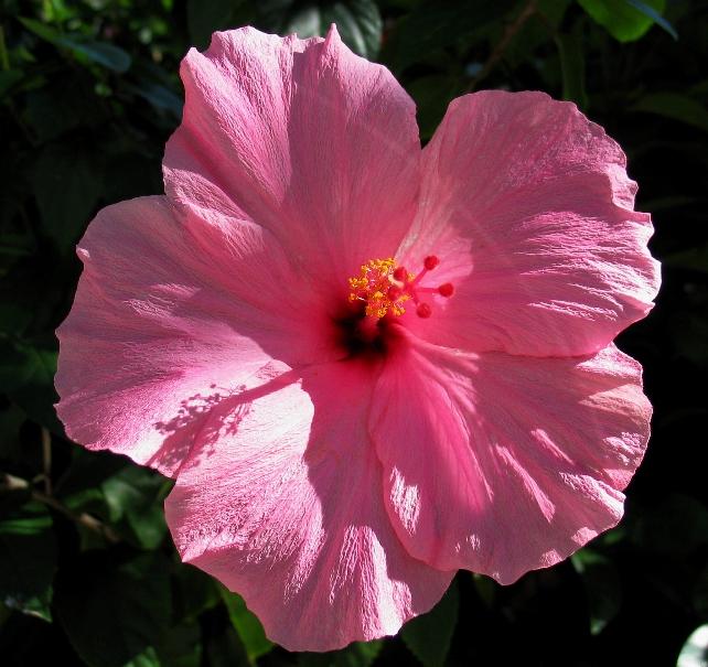 sundayflora12_26.jpg