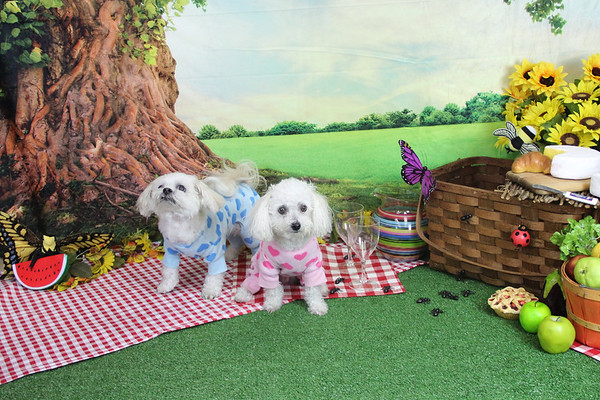 Summer Picnic at Bark N scratch
