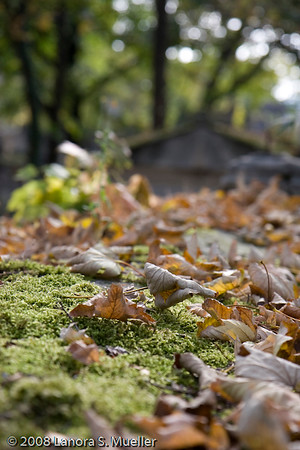A perfect autumn day in Paris at Pere Lachaise.