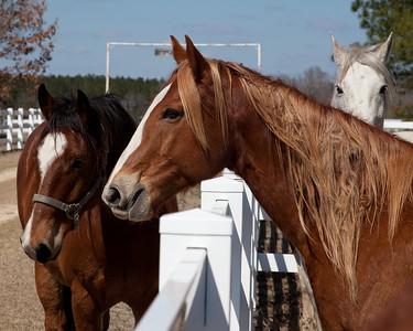 Williams Ranch 2010