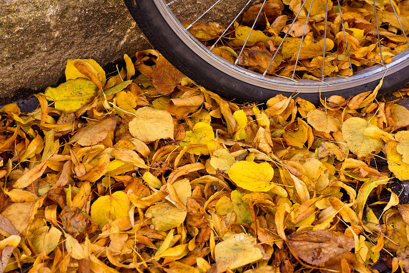 Paris fall colors bicycle 01344.jpg