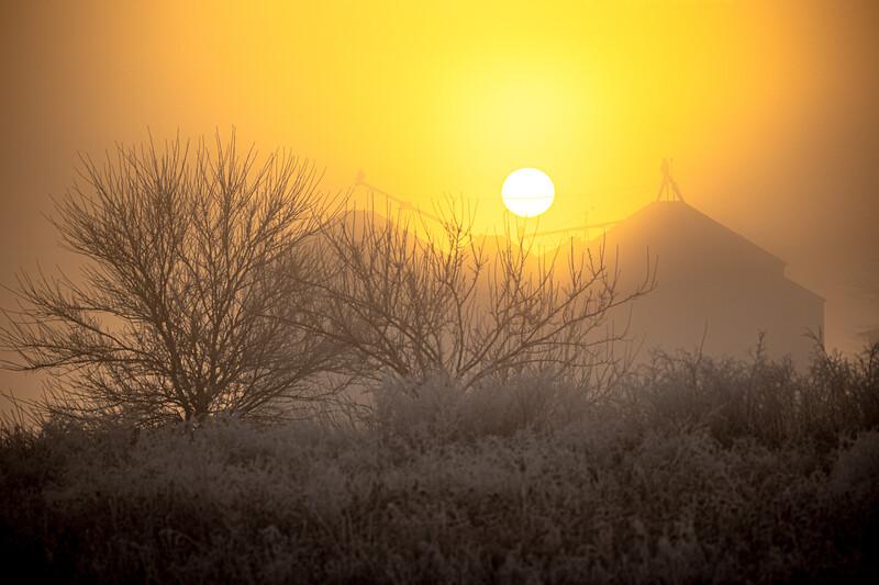 Foggy/Frosty Sunrise