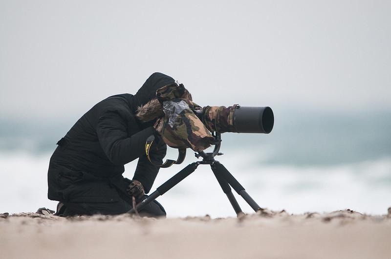 Auf der Robbenjagd(fotografisch) auf Helgoland