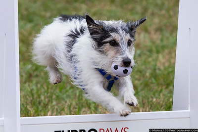 Rural Hill Sheep Dog Trials and Dog Festival - 2017