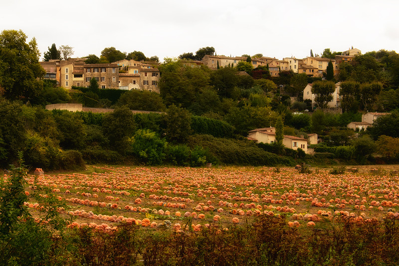Pumpkin patch below Menerbes
